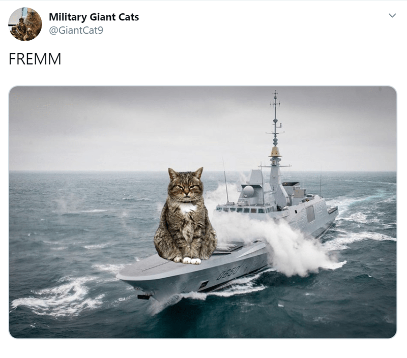 Cat - Military Giant Cats @GiantCat9 FREMM DES0