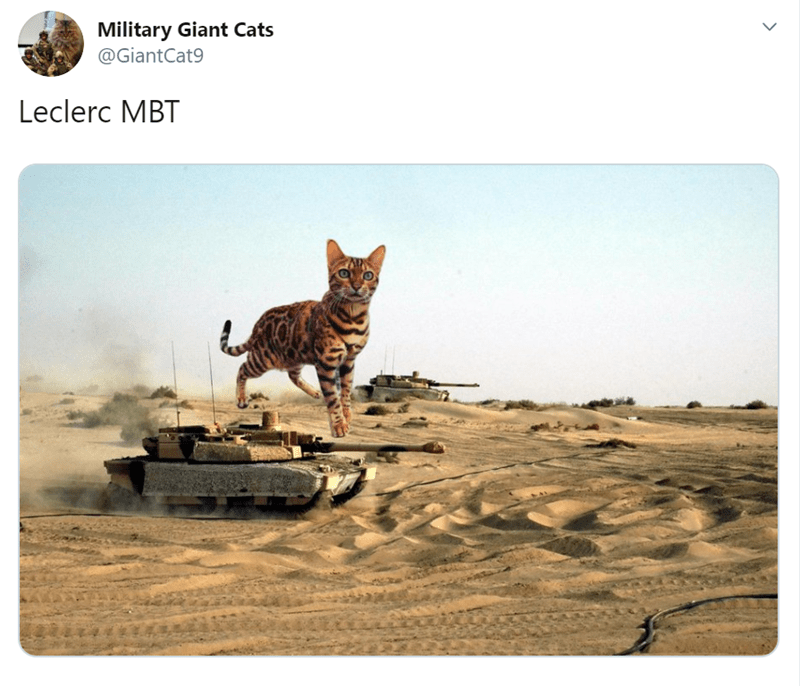Cat - Military Giant Cats @GiantCat9 Leclerc MBT