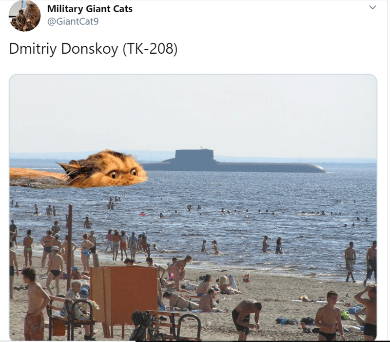 Adaptation - Military Giant Cats @GiantCat9 Dmitriy Donskoy (TK-208)