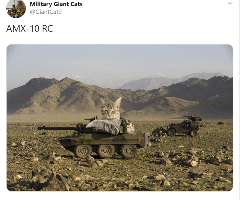 Stock photography - Military Giant Cats @GiantCat9 AMX-10 RC