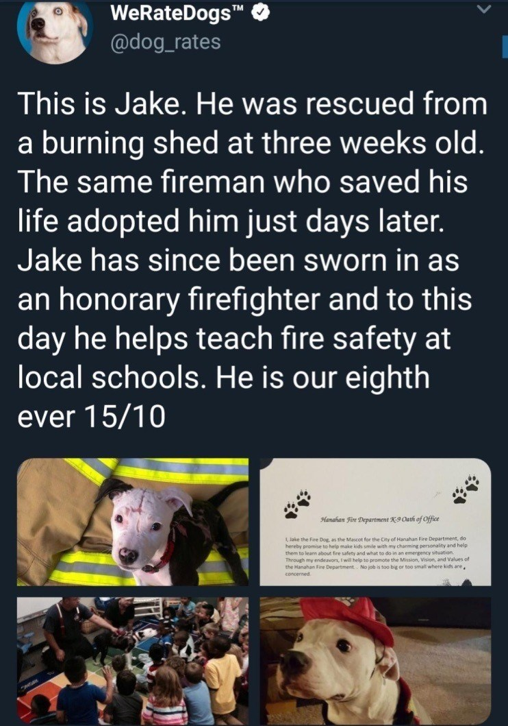 Text - WeRateDogsTM @dog_rates This is Jake. He was rescued from a burning shed at three weeks old. The same fireman who saved his life adopted him just days later. Jake has since been sworn in as an honorary firefighter and to this day he helps teach fire safety at local schools. He is our eighth ever 15/10 Hanahan Fire Department K9 Oath of Office LJake the Fire Dog, as the Mascot for the City of Hanahan Fire Department, do hereby promise to help make kids smile with my charming personality an
