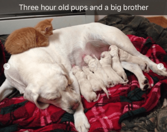 Canidae - Three hour old pups and a big brother