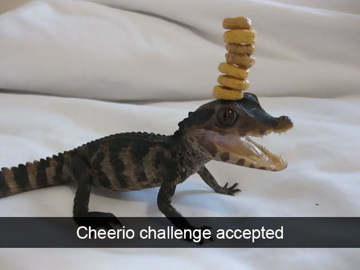 Reptile - Cheerio challenge accepted