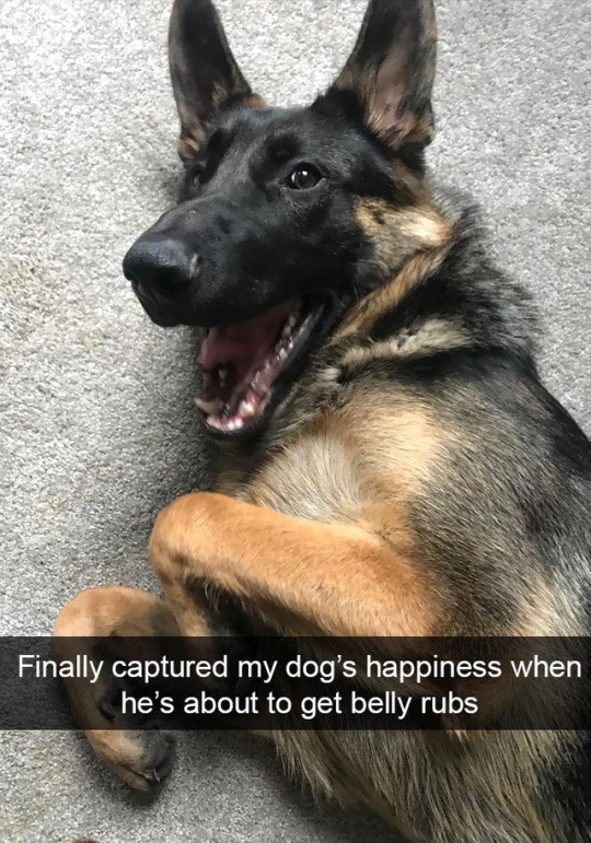 Dog - Finally captured my dog's happiness when he's about to get belly rubs