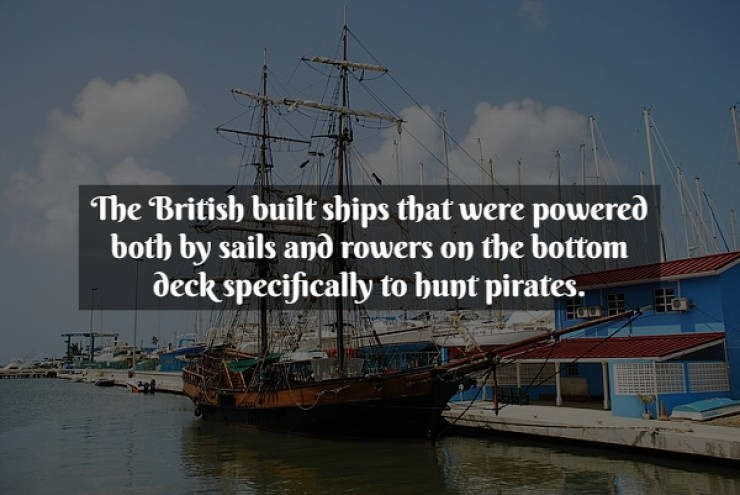 Text - Tall ship - The British built ships that were powered both by sails and rowers on the bottom deck specifically to bunt pirates.