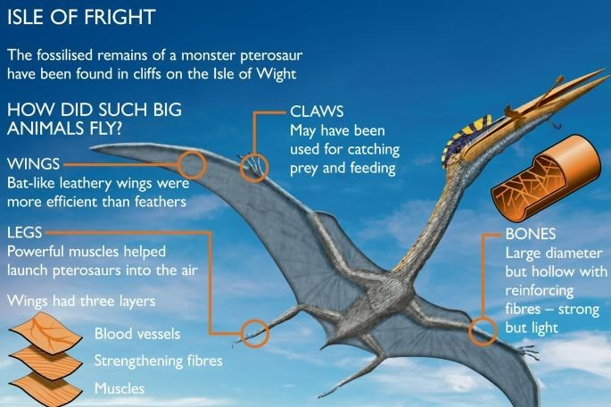 diagram of pterosaur and how it flew