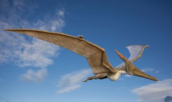 computer graphic image of pterosaur
