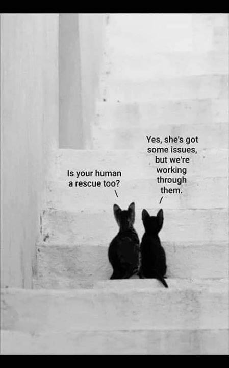 cat memes - 9363147264