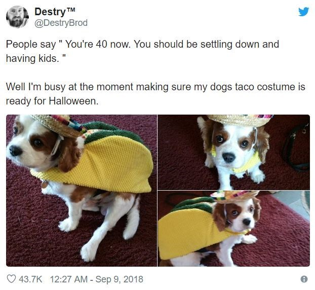 """Dog - Destry TM @DestryBrod People say """" You're 40 now. You should be settling down and having kids."""" Well I'm busy at the moment making sure my dogs taco costume is ready for Halloween. 43.7K 12:27 AM Sep 9, 2018"""