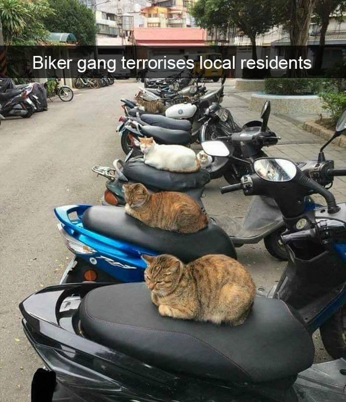 Mode of transport - Biker gang terrorises local residents