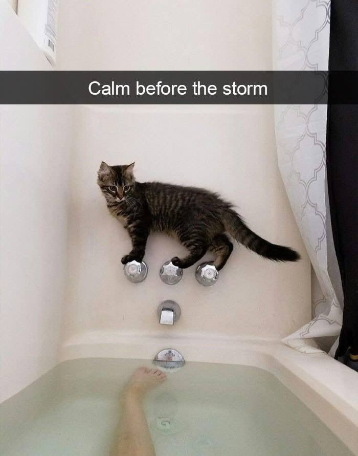 Cat - Calm before the storm