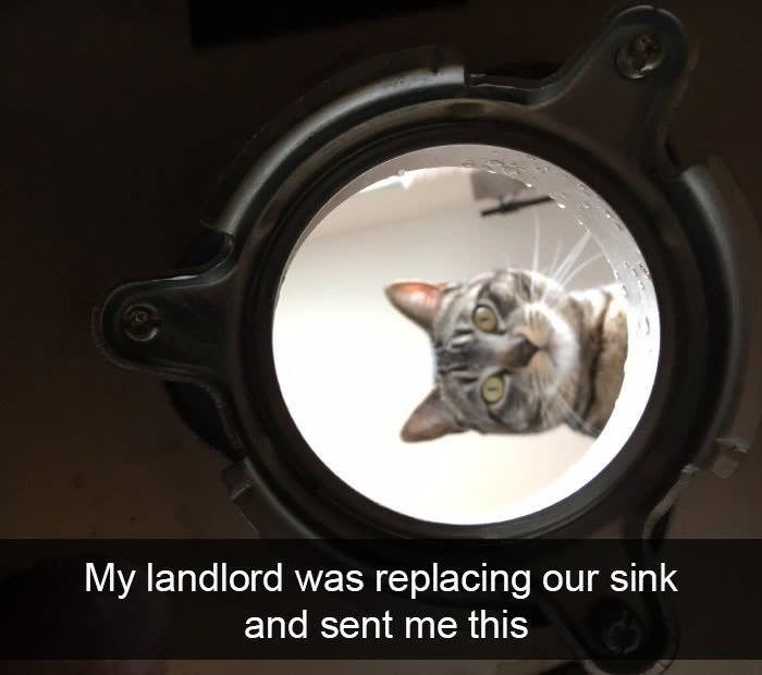 Cat - My landlord was replacing our sink and sent me this