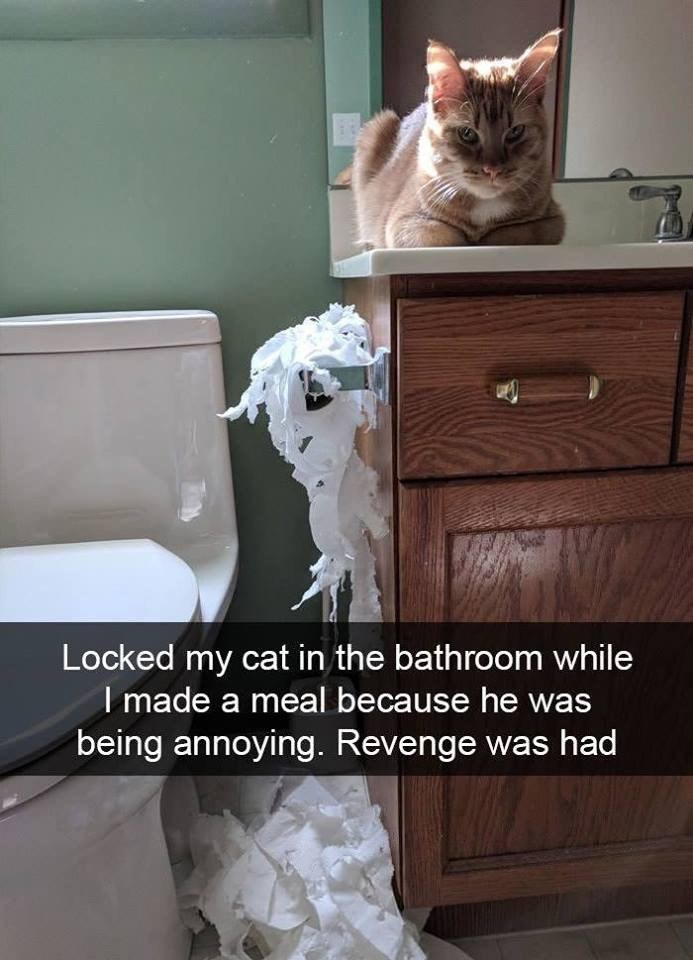 Cat - Locked my cat in the bathroom while I made a meal because he being annoying. Revenge was had