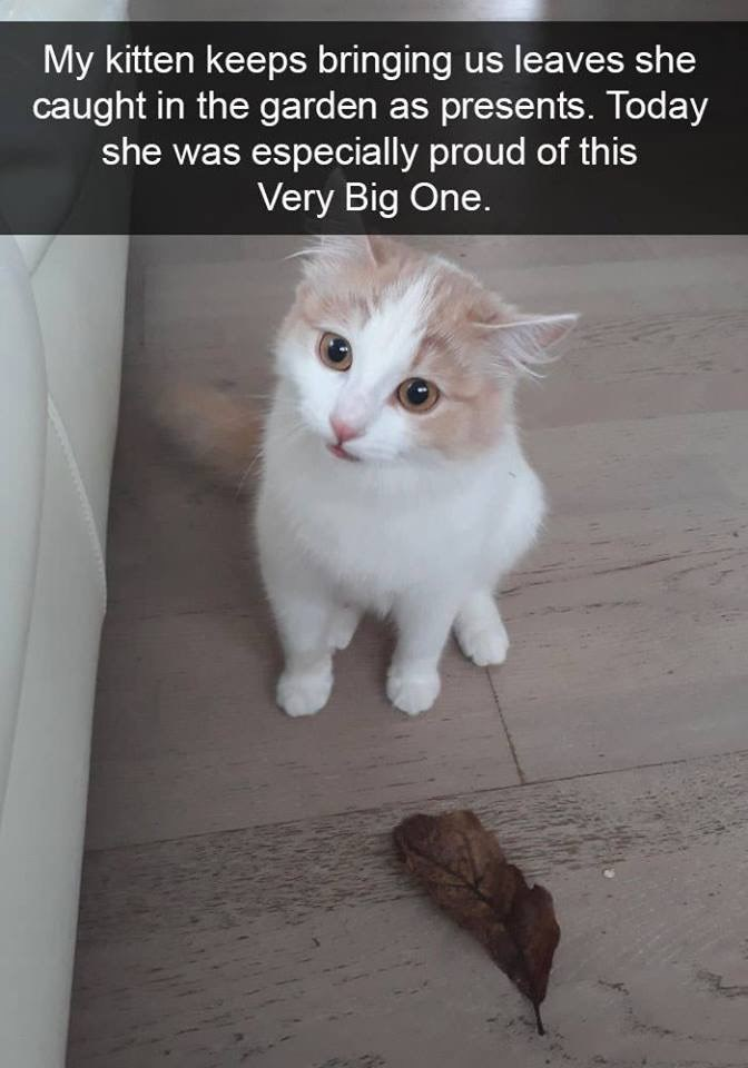 Cat - My kitten keeps bringing us leaves she caught in the garden as presents. Today she was especially proud of this Very Big One.