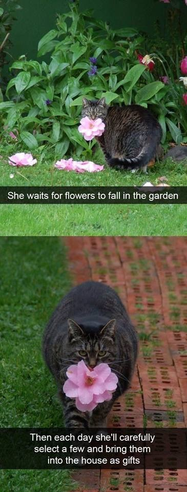 Cat - She waits for flowers to fall in the garden Then each day she'll carefully select a few and bring them into the house as gifts