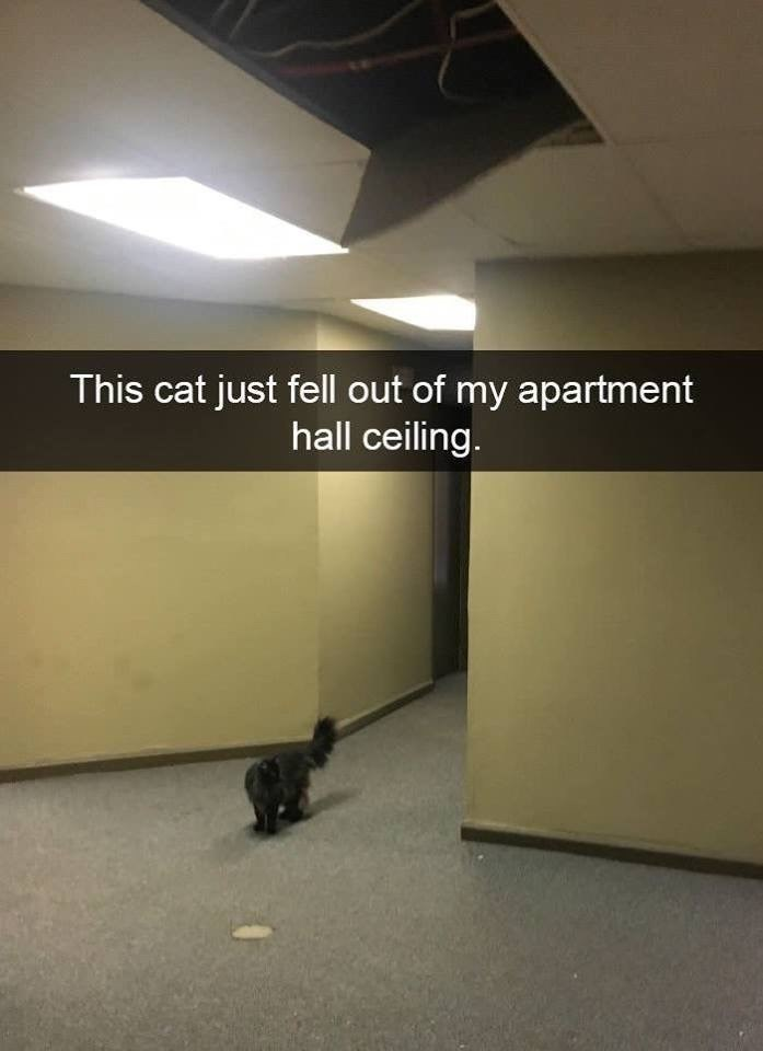 Wall - This cat just fell out of my apartment hall ceiling.