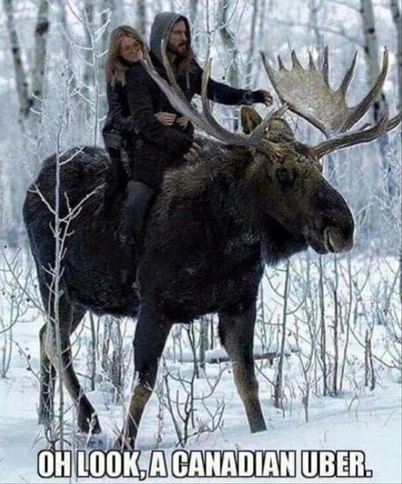 Moose - OH LOOK,A CANADIAN UBER.
