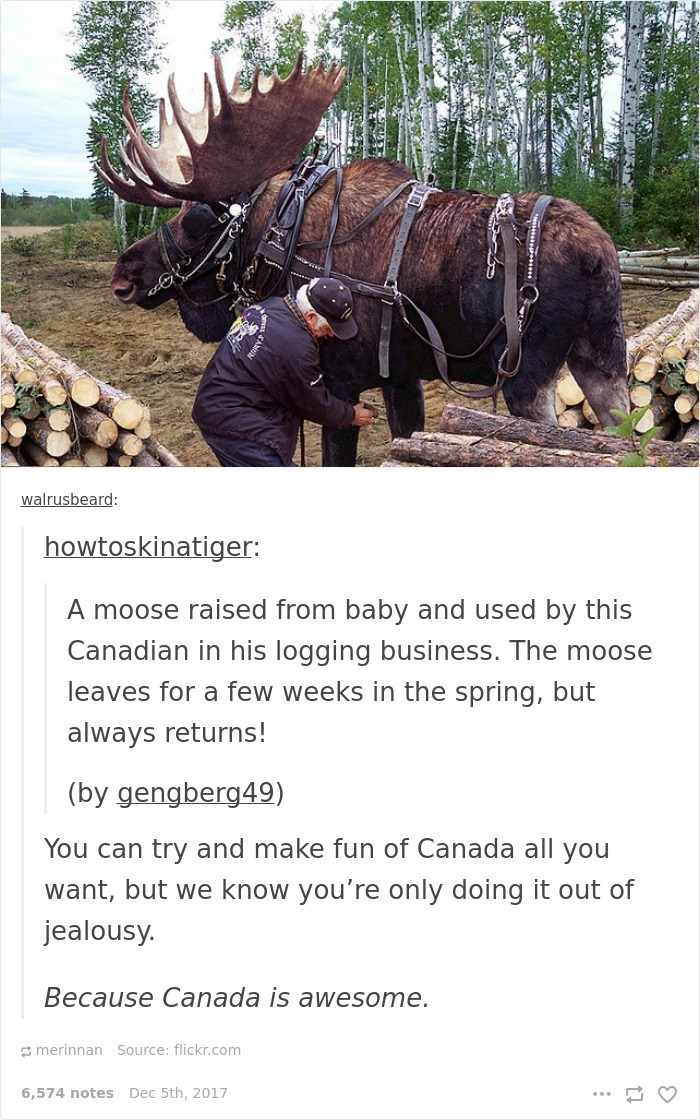 Organism - walrusbeard: howtoskinatiger: A moose raised from baby and used by this Canadian in his logging business. The moose leaves for a few weeks in the spring, but always returns! (by gengberg49) You can try and make fun of Canada all you want, but we know you're only doing it out of jealousy. Because Canada is awesome. merinnan Source: flickr.com 6,574 notes Dec 5th, 2017