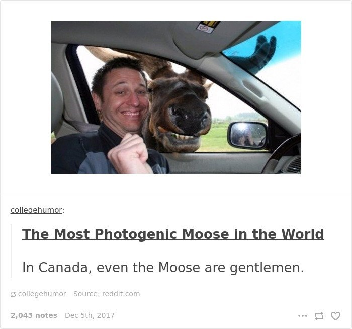 Vehicle door - collegehumor The Most Photogenic Moose in the World In Canada, even the Moose are gentlemen. collegehumor Source: reddit.com 2,043 notes Dec 5th, 2017