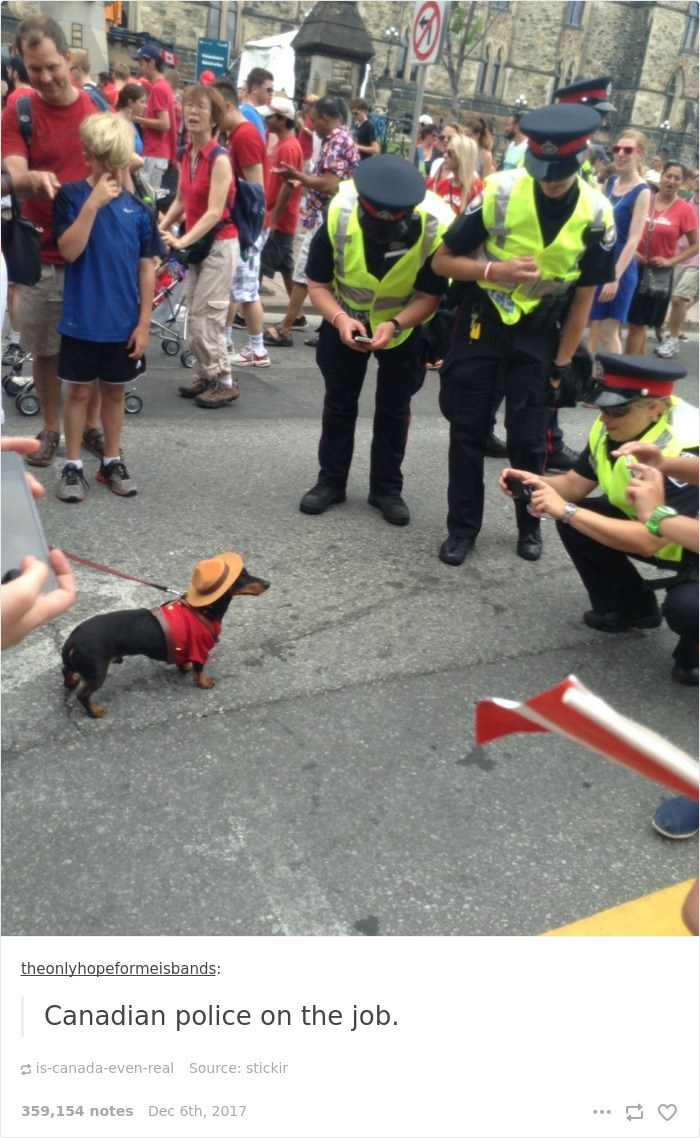 Dog - theonlyhopeformeisbands: Canadian police on the job. is-canada-even-real Source: stickir 359,154 notes Dec 6th, 2017