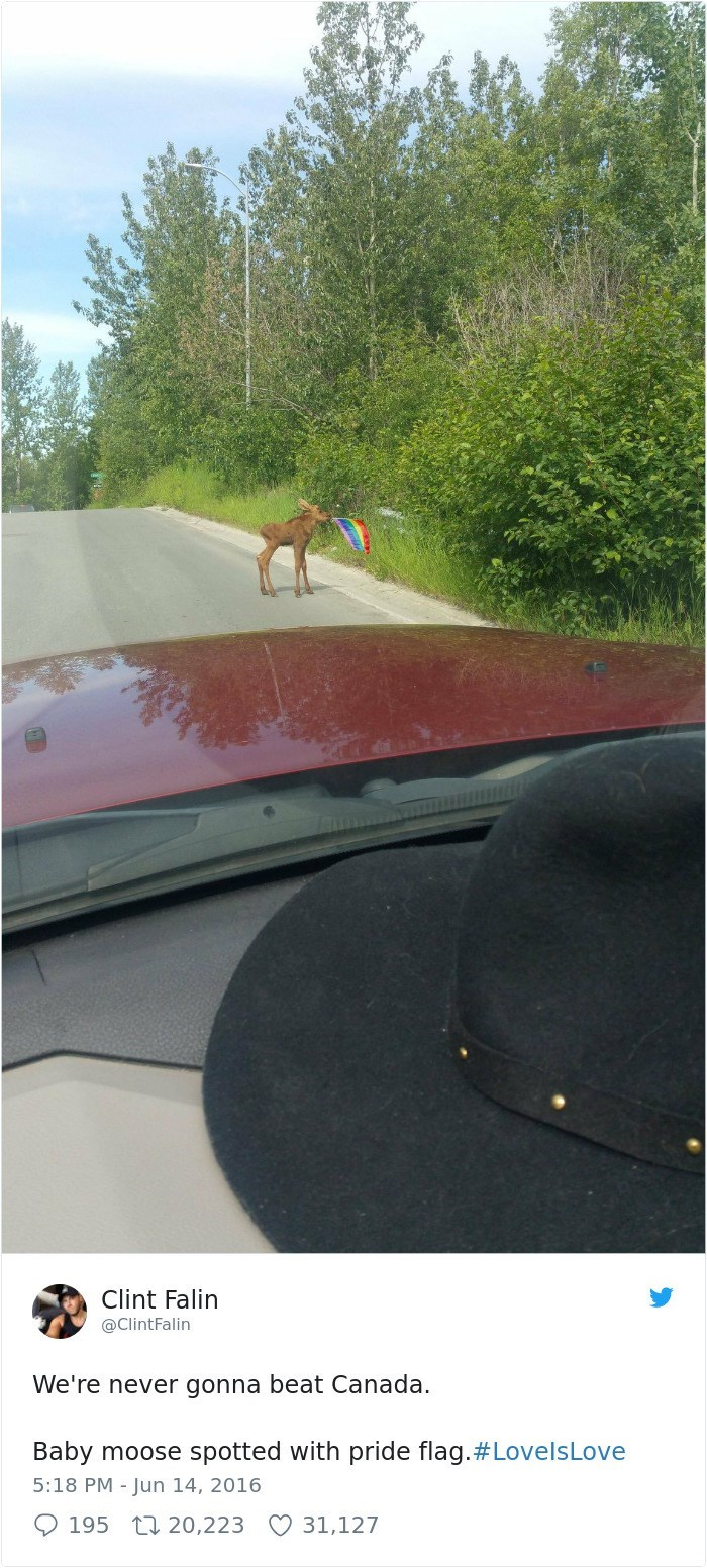 Sport venue - Clint Falin @ClintFalin We're never gonna beat Canada. Baby moose spotted with pride flag.#Love Is Love 5:18 PM - Jun 14, 2016 31,127 195 20,223