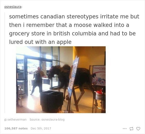 Text - osneslaura: sometimes canadian stereotypes irritate me but then i remember that a moose walked into a grocery store in british columbia and had to be lured out with an apple Complienenta Rend setheverman Source: osneslaura-blog 106,587 notes Dec 5th, 2017
