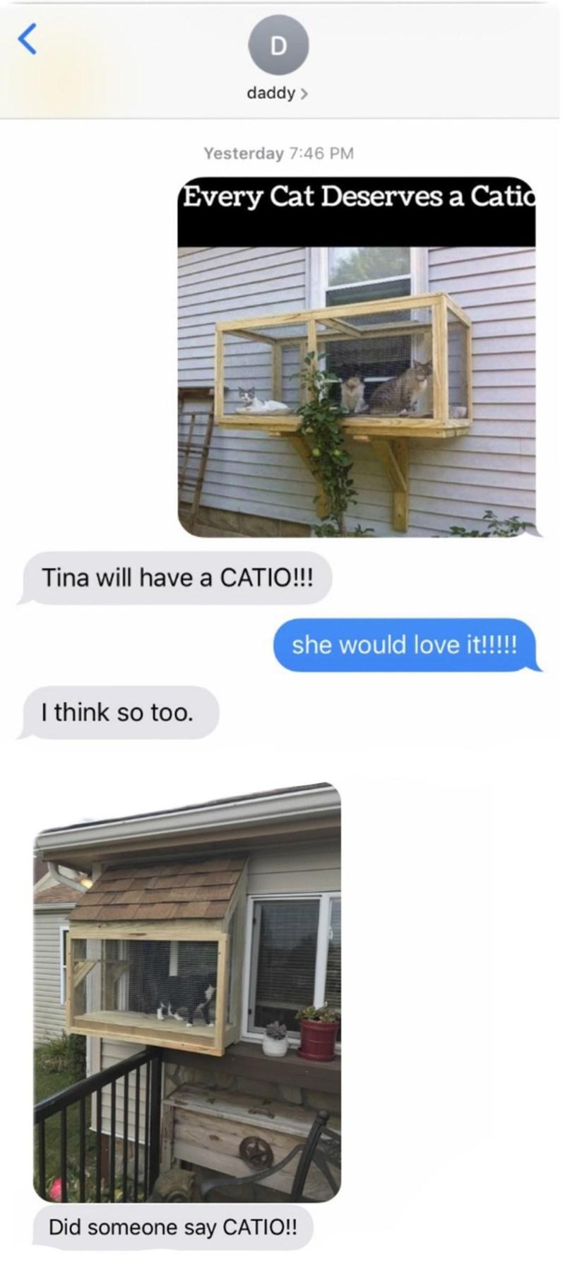 cat memes - 9363533824