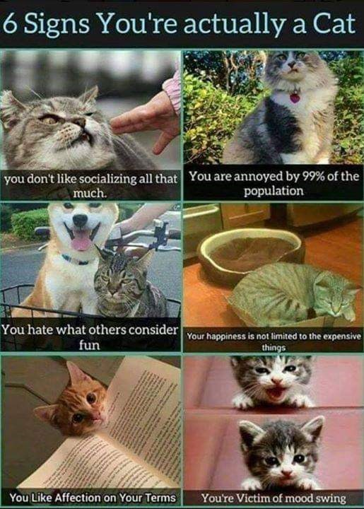 Cat - 6 Signs You're actually a Cat You are annoyed by 99% of the population you don't like socializing all that much. You hate what others consider Your happiness is not limited to the expensive fun things You're Victim of mood swing You Like Affection on Your Terms पजिकि