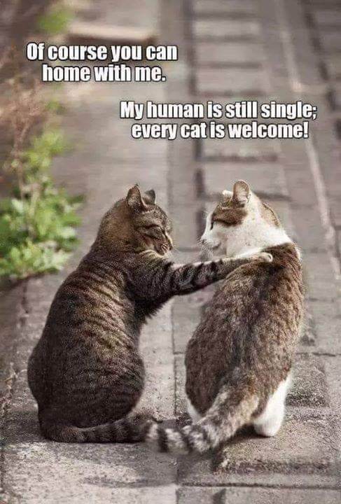 Cat - Of course you can home with me. My human is still single Gvery catis welcome!