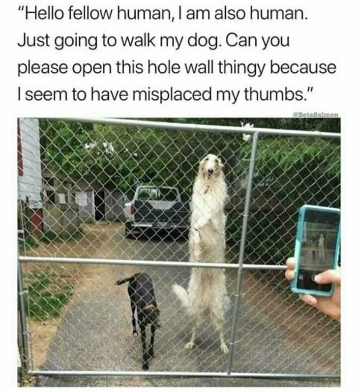 """Dog - """"Hello fellow human, I am also human. Just going to walk my dog. Can you please open this hole wall thingy because Iseem to have misplaced my thumbs."""" BetaSalmon"""
