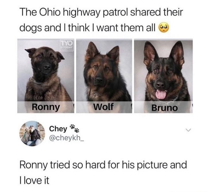 Dog - The Ohio highway patrol shared their dogs and I think I want them all TYO CTODAY Wolf Ronny Bruno Chey @cheykh_ Ronny tried so hard for his picture and I love it