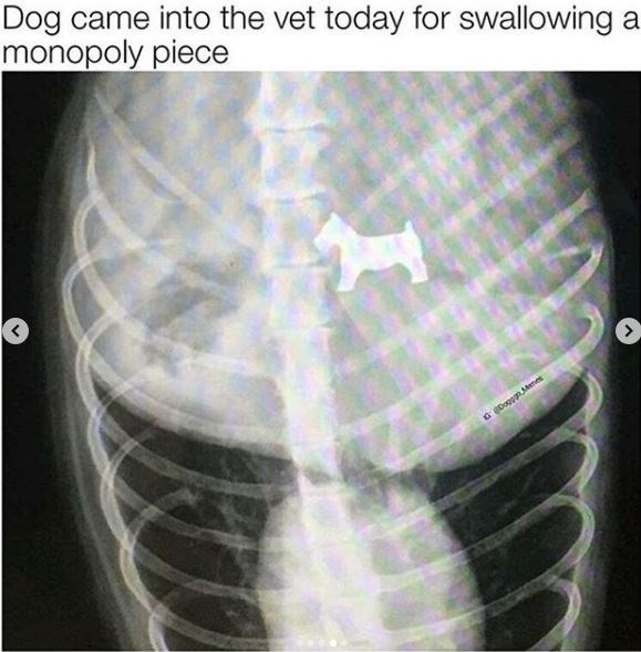 X-ray - Dog came into the vet today for swallowing a monopoly piece Doggn Mmes