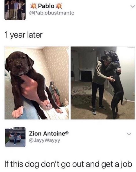 Dog - Pablo @Pablobustmante 1 year later Zion Antoine® @JayyWayyy If this dog don't go out and get a job