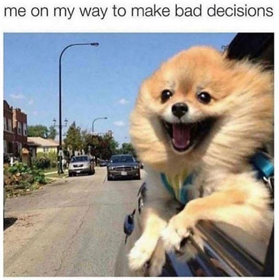 Dog - me on my way to make bad decisions