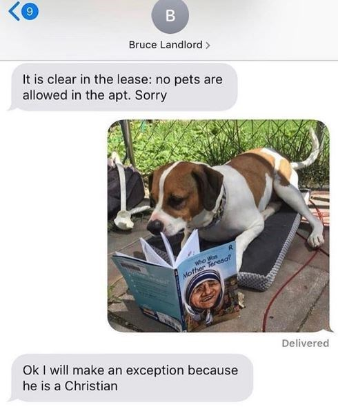 Canidae - B Bruce Landlord> It is clear in the lease: no pets are allowed in the apt. Sorry who Was Mother Teresaf Delivered Ok I will make an exception because he is a Christian