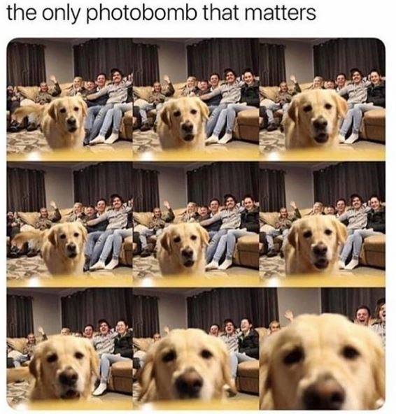 Mammal - the only photobomb that matters