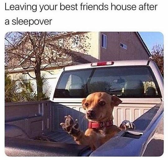 Dog - Leaving your best friends house after a sleepover GO