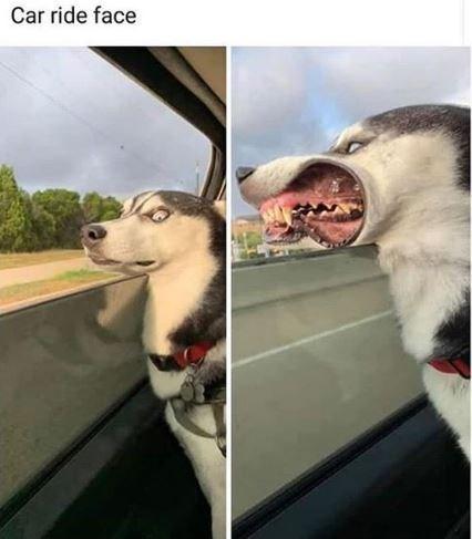 Nose - Car ride face
