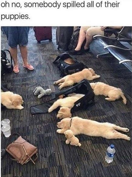 Hand - oh no, somebody spilled all of their puppies.