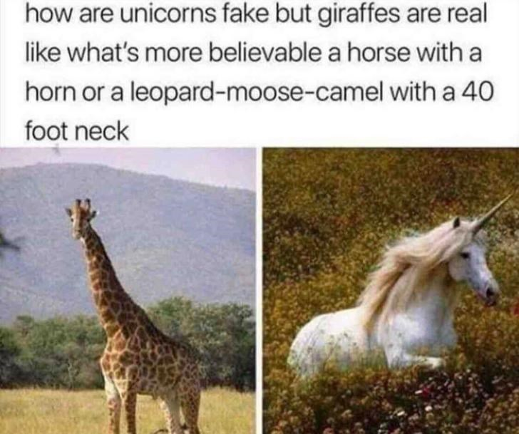 Giraffe - how are unicorns fake but giraffes are real like what's more believable a horse with a horn or a leopard-moose-camel with a 40 foot neck