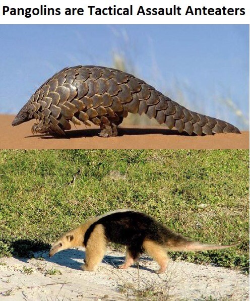 Giant anteater - Pangolins are Tactical Assault Anteaters