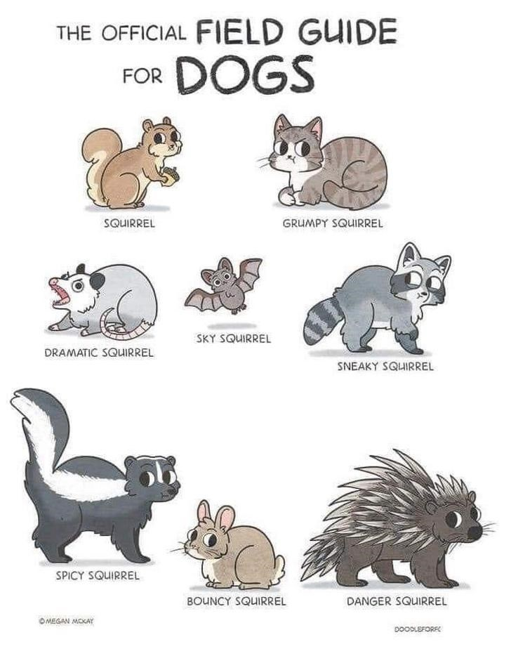 Animal figure - THE OFFICIAL FIELD GUIDE DOGS FOR SQUIRREL GRUMPY SQUIRREL SKY SQUIRREL DRAMATIC SQUIRREL NEAKY SQUIRREL SPICY SQUIRREL BOUNCY SQUIRREL DANGER SQUIRREL OMEGAN MOKAY DOODLEFORF