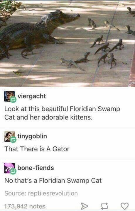 Adaptation - viergacht Look at this beautiful Floridian Swamp Cat and her adorable kittens. tinygoblin That There is A Gator bone-fiends No that's a Floridian Swamp Cat Source: reptilesrevolution 173,942 notes