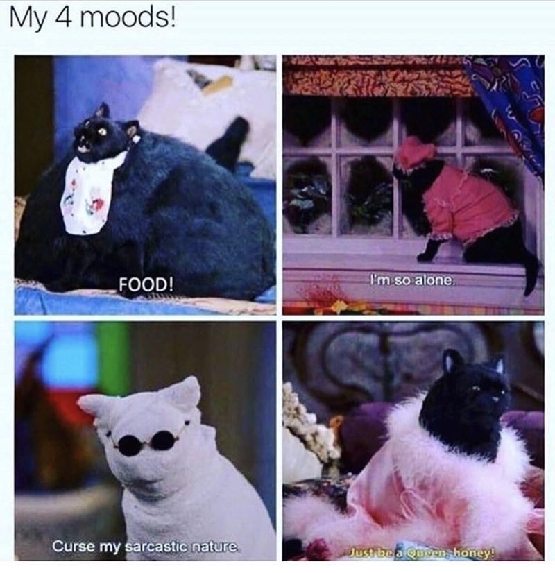 Cat - My 4 moods! Em so alone FOOD! Curse my sarcastic nature Just be a Quoen, honey!