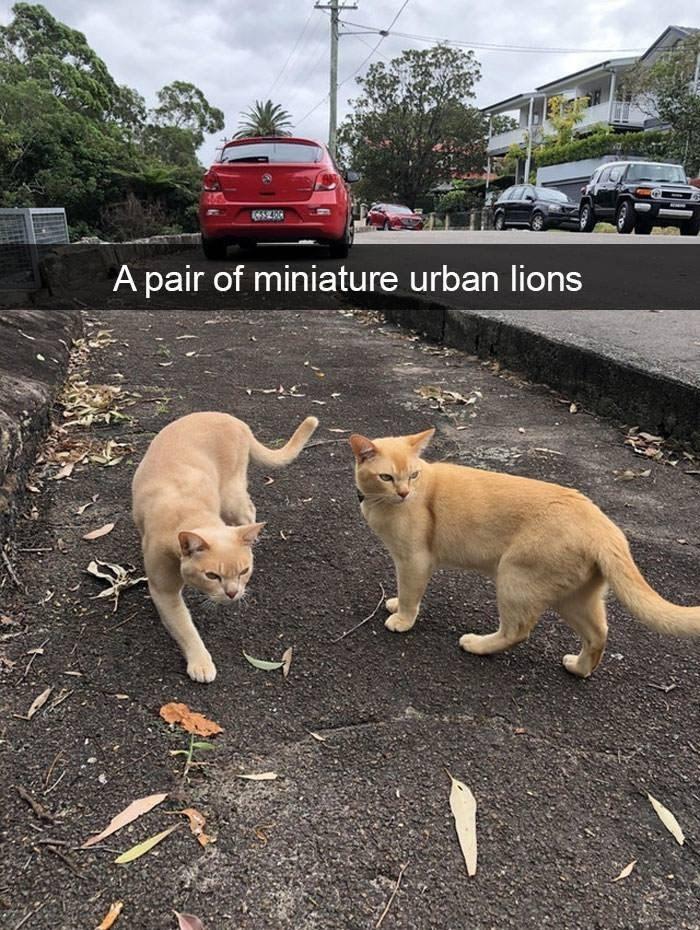 Dog - A pair of miniature urban lions