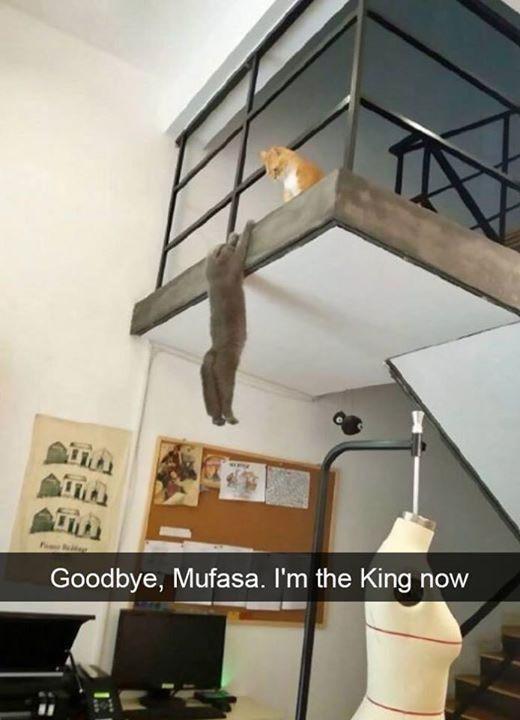 Property - Goodbye, Mufasa. I'm the King now