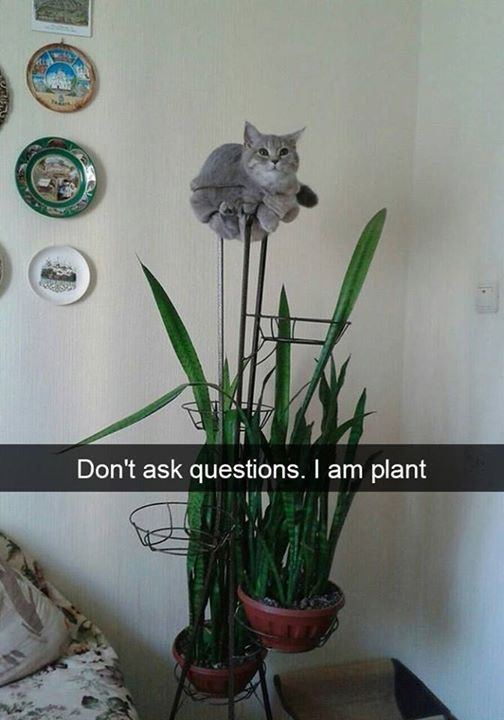 Flower - Don't ask questions. I am plant