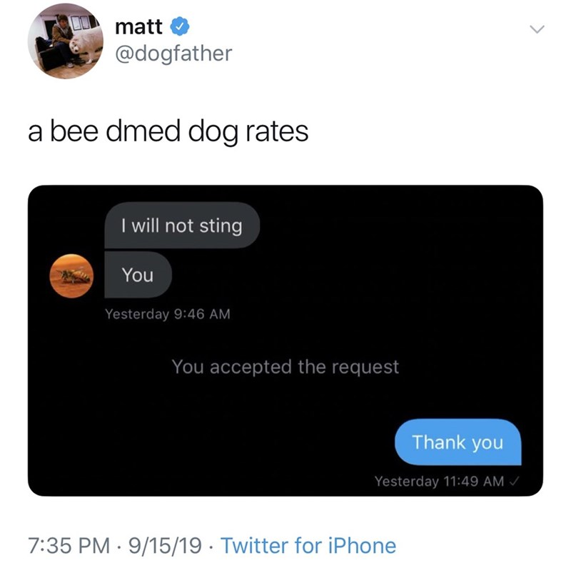 Text - matt @dogfather a bee dmed dog rates I will not sting You Yesterday 9:46 AM You accepted the request Thank you Yesterday 11:49 AM 7:35 PM 9/15/19 Twitter for iPhone
