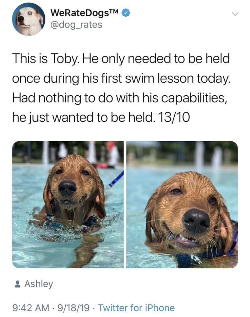 Vertebrate - WeRateDogsTM @dog_rates This is Toby. He only needed to be held once during his first swim lesson today. Had nothing to do with his capabilities, he just wanted to be held. 13/10 Ashley 9:42 AM 9/18/19 Twitter for iPhone