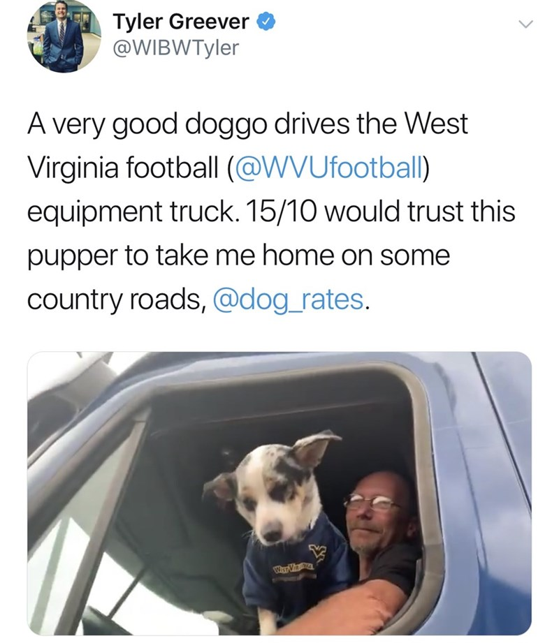 Dog breed - Tyler Greever @WIBWTyler A very good doggo drives the West Virginia football (@WVUfootball) equipment truck. 15/10 would trust this pupper to take me home on some country roads, @dog_rates. WIsr Vin